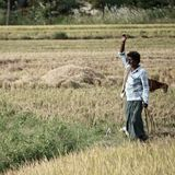 10,349 farmers committed suicide in 2018: NCRB