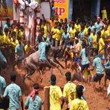 அவனியாபுரம் ஜல்லிக்கட்டில் சீரும் காளைகள் : திரண்ட மக்கள்