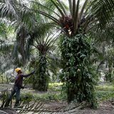The Palm Oil War and how India and Malaysia are diplomatically resolving it