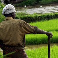 Why budgets in recent years failed to solve the agrarian crisis