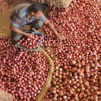 Govt bans onion export with immediate effect to curb prices