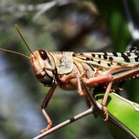 Apocalypse Now: Locust attack affects 3.6L hectare land in Rajasthan; Large parts of Africa are also affected