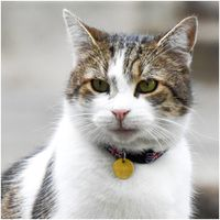 Larry, the 10 Downing Street cat