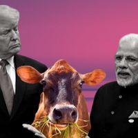 Non-veg cows to spoil Modi-Trump bromance?