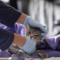 Coronavirus and pets: Cats can get COVID-19, says study; WHO begins probe