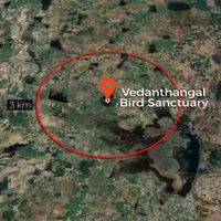 Study confirms presence of pollutants in Wetlands within Vedanthangal Bird Sanctuary