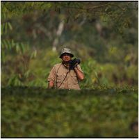 तस्वीरों की ज़ुबां: जंगल के साथ रोमांस, 15 साल में उतारी गईं 6 चुनिंदा तस्वीरें