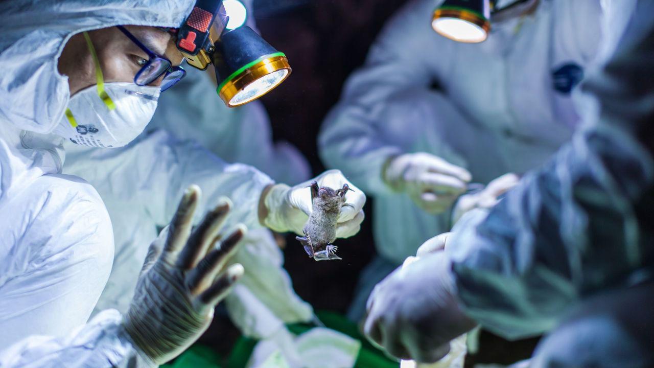 कोरोनावायरस पर हो रहे हैं कई शोध