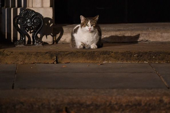 Larry the cat sits on the step of Number 10, Downing Street as dusk falls. (Photo by Jeff J Mitchell/Getty Images)
